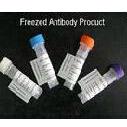 """Fibulin-5抗体 抗""""衰老关键蛋白""""抗体"""